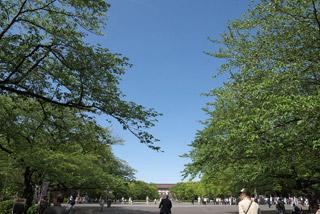 245 東京国立博物館 新緑