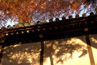 377 東福寺 残り紅葉