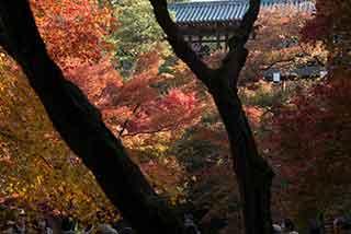 465 錦秋の京都 東福寺