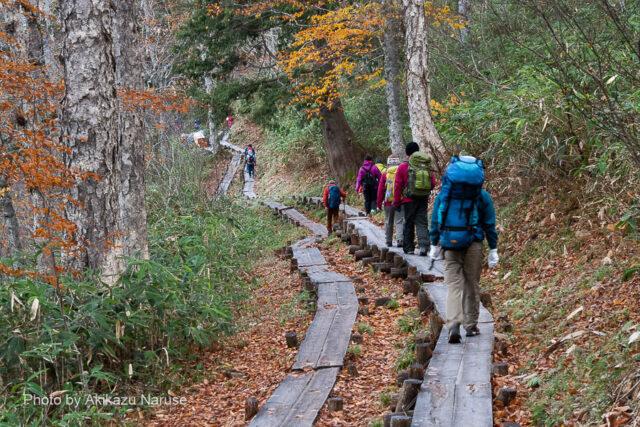 尾瀬ヶ原:尾瀬ヶ原への下り道、下り傾斜の木道は霜で滑りやすく慎重に歩く。