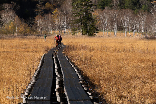尾瀬ヶ原:山ノ鼻から尾瀬ヶ原の草紅葉に分け入る、木道の霜が朝日で溶けて歩きやすくなってきた。