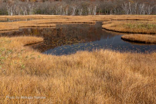 尾瀬ヶ原:草紅葉の中、池塘を右に左にみつつカメラを構え時を忘れて尾瀬の自然を堪能。