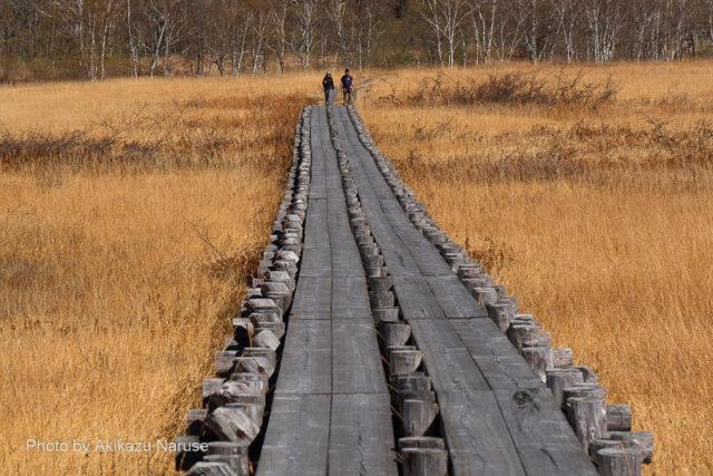 尾瀬ヶ原:ヨッピ吊り橋から牛首方面へ、見ての通り、時折ハイカーの姿を見るのみ。