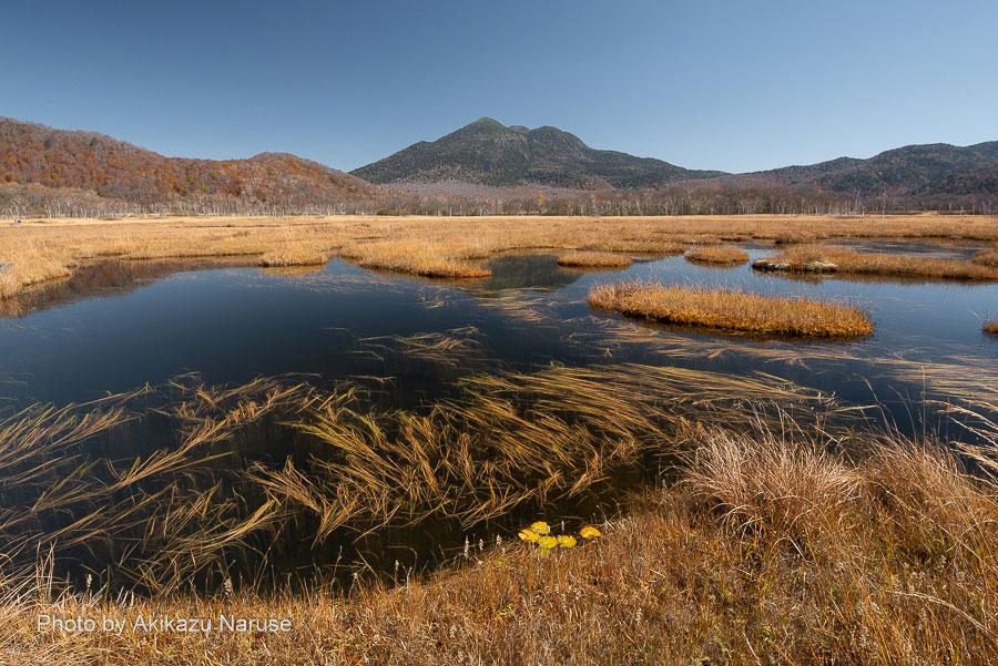 尾瀬ヶ原:燧ヶ岳と池塘、これは花筏ならぬ草筏とでも言うのだろうか。初めて見る光景だ。