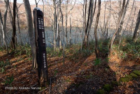 蔦の森:蔦沼を右に見てブナの森へ分け入る。