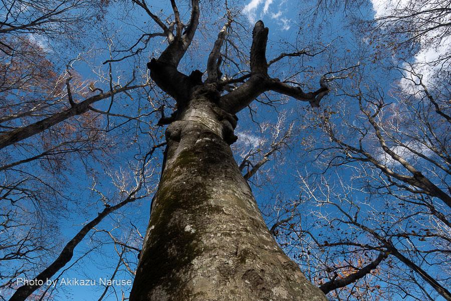 蔦の森:季節は晩秋、木々の葉は落ち傾いた日差しが森の中を明るく照らす。