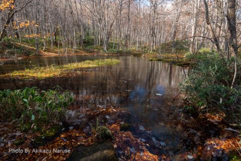 蔦の森:蔦沼の展望デッキから15分ほど歩いたころ「鏡沼」に着いた。
