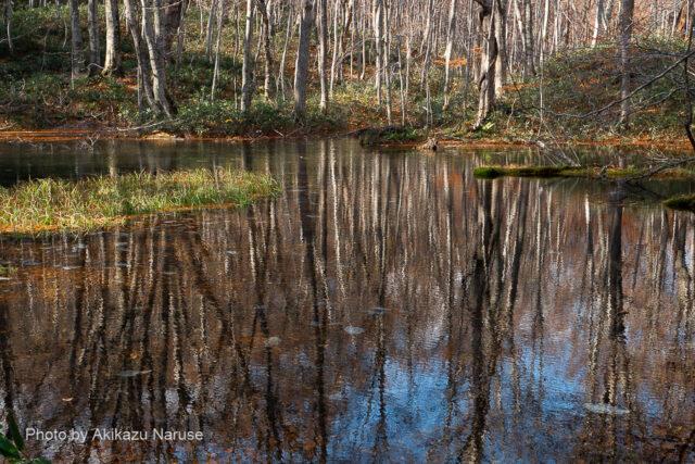 蔦の森:鏡沼、澄み切った水面に木々が映る様は正に鏡沼の名にふさわしい。 案内板によると人造の沼とか。穏やかで開放感のある沼というより池といった風情。
