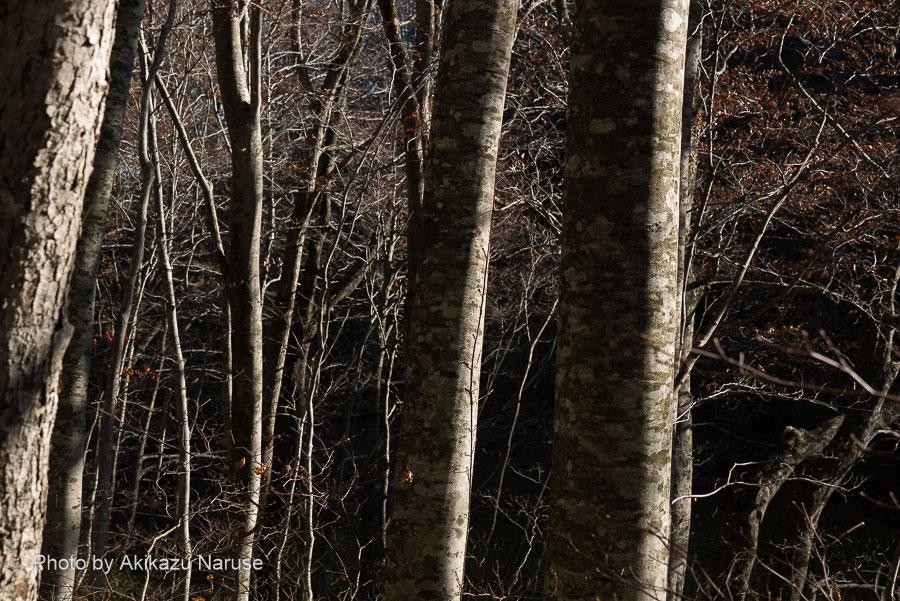 蔦の森:木々の葉もほとんど落ちて冬の様相。