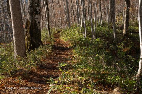 蔦の森:月沼からしばし歩くとやがて右手の木の間にチラホラと長沼が見えてくる。坂道を下るとやがて 「野鳥めぐりの小路」と合流し長沼へ。