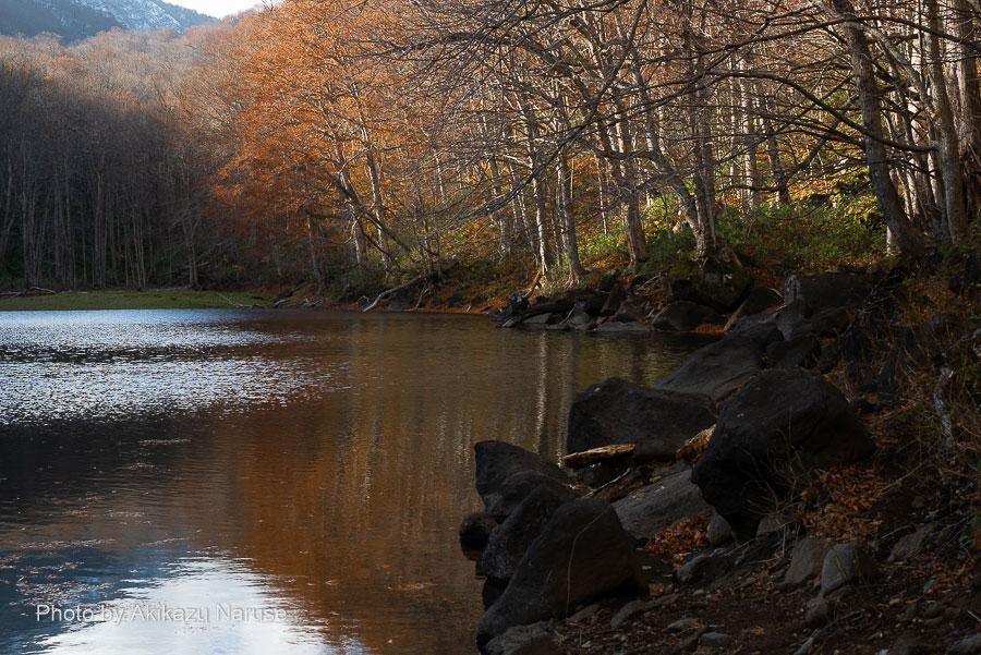 蔦の森:長沼、午後2時、秋の日は傾きすでに水面は日陰になっていた。葉の落ちきらない木々が水面にうつり幻想的だった。鳥のさえずりと微かな風音が聞こえるのみで静かな雰囲気、しばしこの雰囲気に浸る。
