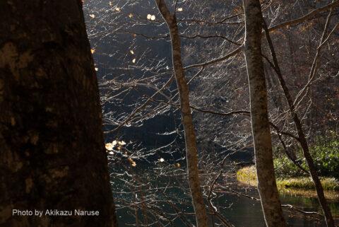 蔦の森:一寸したアップダウンを繰り返しやがて「菅沼」へ。