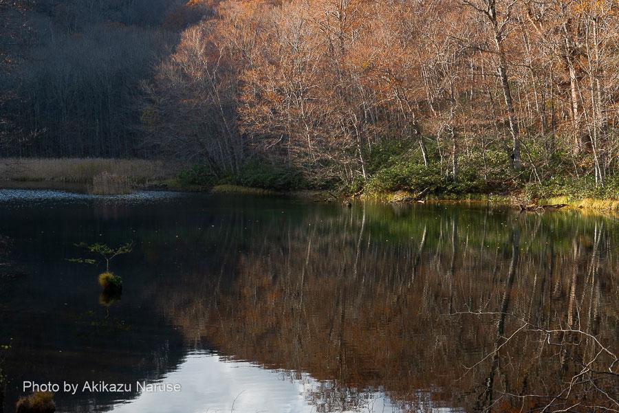 蔦の森:菅沼、長沼同様すでに水面は日陰だった、秋の名残の紅葉を撮影。