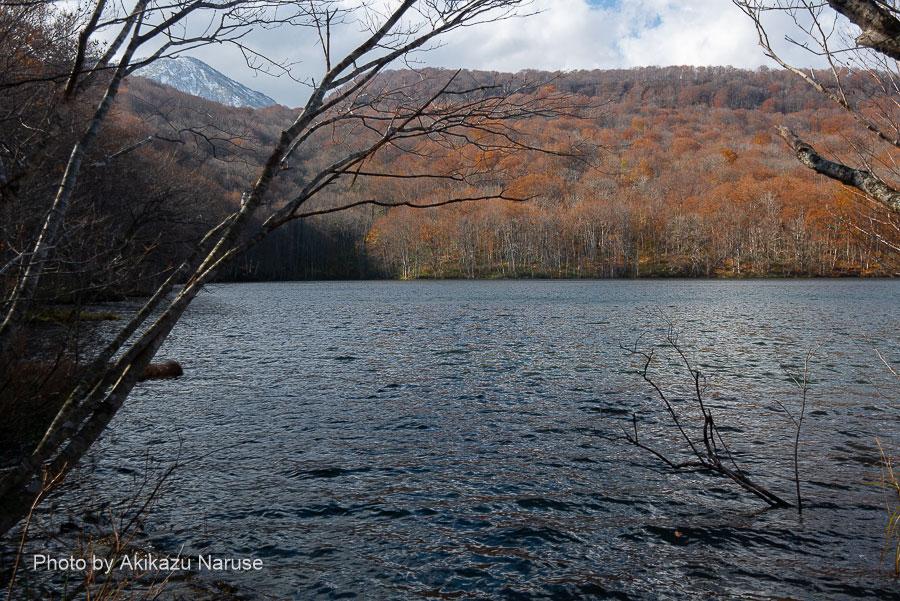 478:蔦の森、沼めぐり 晩秋