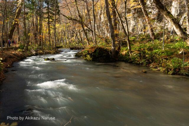 奥入瀬渓流:岸壁が連なる対岸の屏風岩を見つつ渓流際の散策路を歩く。
