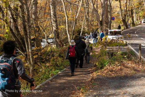 奥入瀬渓流:奥入瀬渓流でおそらく一番知名度の高い「阿修羅の流れ」へ向かう人の列。