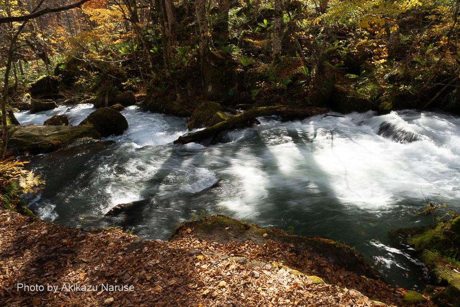 奥入瀬渓流:阿修羅の流れ、渓流中で屈指の激流がこの阿修羅の流れ。人気スポットで比較的空いている晩秋の今でも結構な人だかりだった。