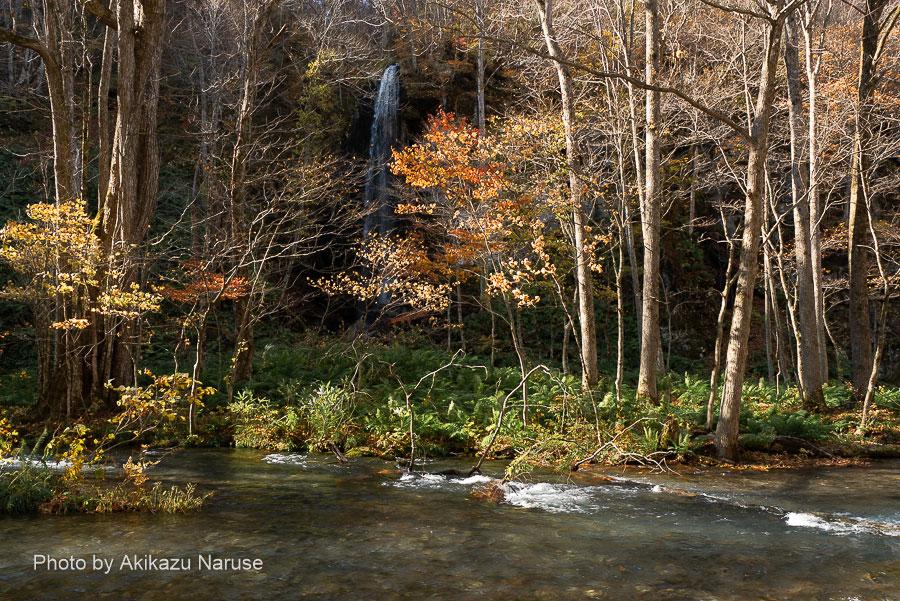 奥入瀬渓流:白絹の滝「滝ペディア」によると高さ30mの直爆となっている。この近くには白糸の滝、不老の滝などがある。