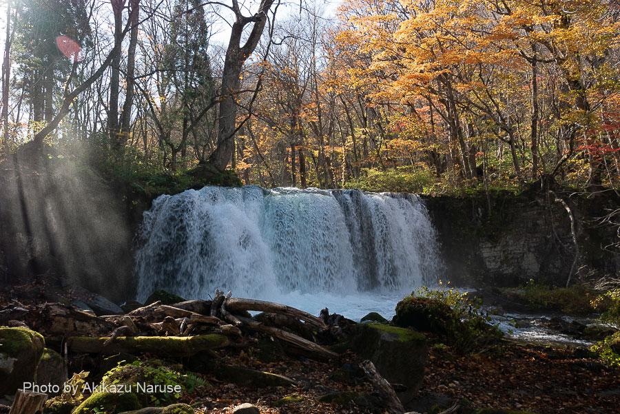 奥入瀬渓流:渓流散策のフィナーレにふさわしい「銚子大滝」、轟音をとどろかせ水煙を舞上げながらダイナミックに流れ落ちるこの滝は、渓流本流最大の滝。 魚止めの滝ともいわれる銚子大滝、かつてヒメマスの養殖が成功するまで水源の十和田湖には魚がいなかったといわれる。 十和田湖畔「子ノ口」まで約1.6Km、穏やかな散策路が続く、子ノ口で遅めの昼食→湖上遊覧で休屋へ。