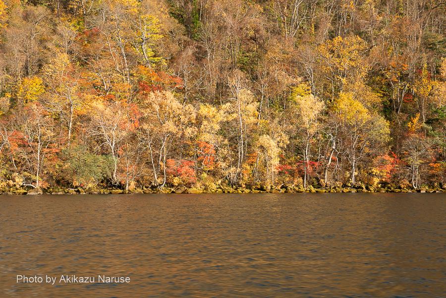 十和田湖:近づくとこのような感じ、木々が水際まで生えている、水位が一定で安定しているためだろう。船内にはガイド音声が流れいるがデッキからは風の音にかき消されほとんど聞き取れない。絶景にただただ見とれるだけだ。