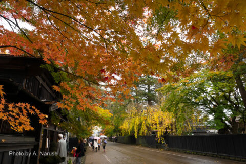 武家屋敷通り:角館駅から歩いて約10分、武家屋敷の建ち並ぶ武家屋敷通り。
