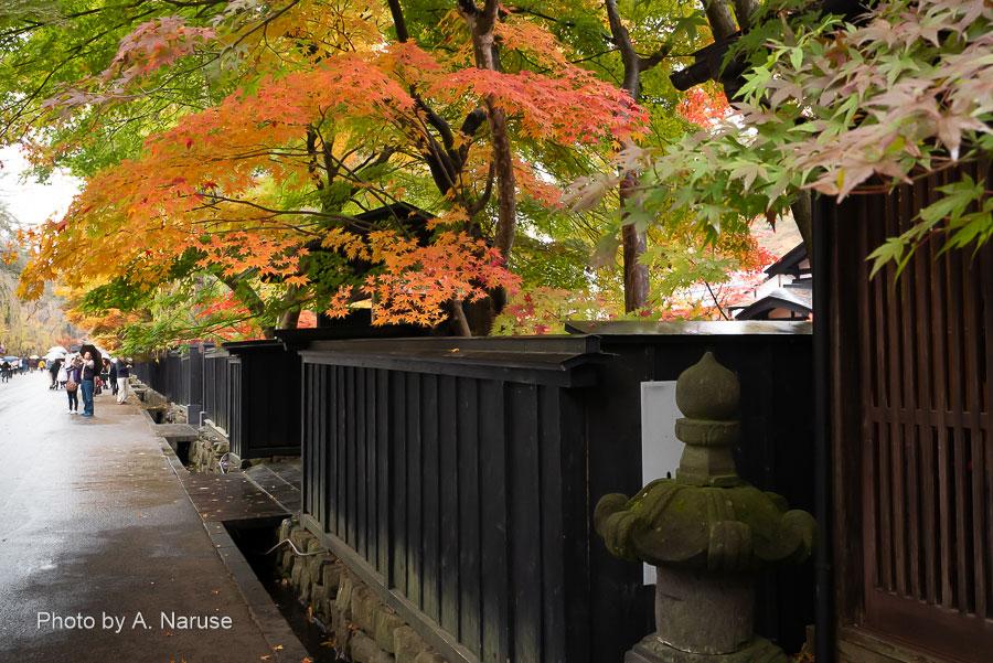 武家屋敷:武家屋敷は黒板塀で囲まれ門がしつらえられている。