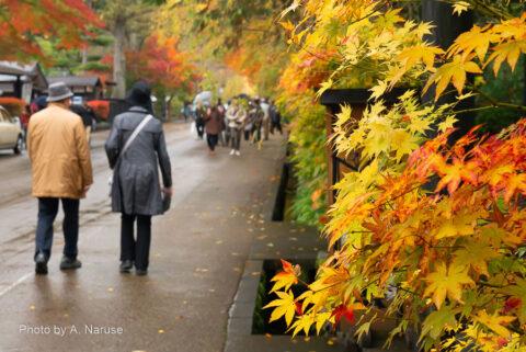 武家屋敷通り:紅葉のグラデーションが良い雰囲気だ。