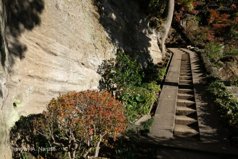 円覚寺:選仏場の脇からはいり「龍隠庵」へ至る上り石段。