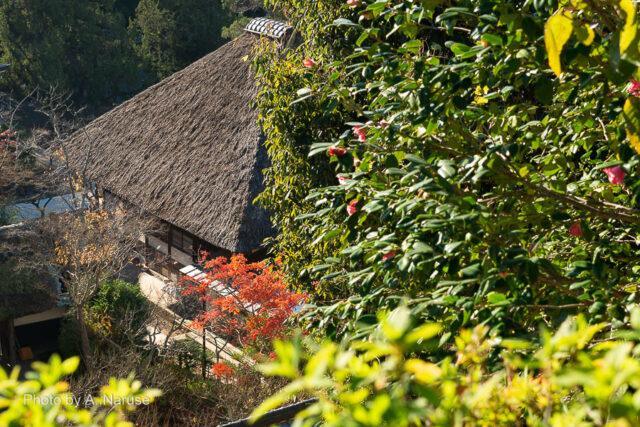 円覚寺:龍隠庵展望所から藁葺き屋根の選仏場を見下ろす。