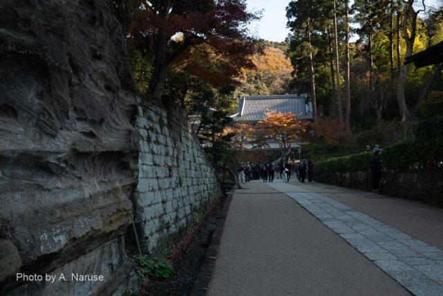 円覚寺:総門から再奥の「黄梅院」ヘ至る道は約500m、広大な境内だ。前方は「仏日庵」。