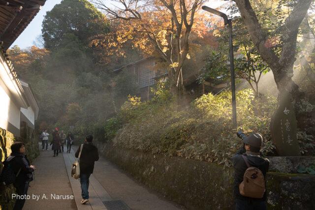 円覚寺:「黄梅院」への参道、落ち葉焚きの煙が朝陽で浮き上がる。