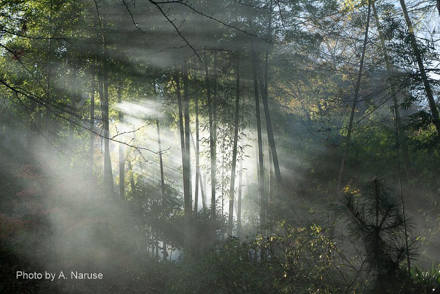 円覚寺:落ち葉焚きの煙と竹林、朝の冷気を全身に感じつつ散策。