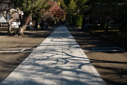 円覚寺:三門近くまで戻ってきた、散策も終わりに近い、谷戸の境内にもようやく光がゆき渡り始めた。