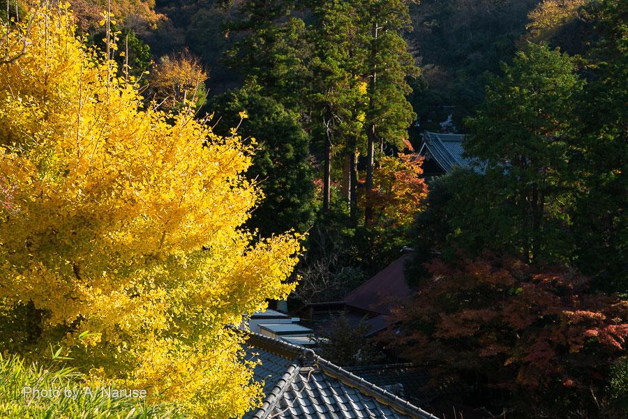 482:鎌倉 円覚寺 朝の境内散策