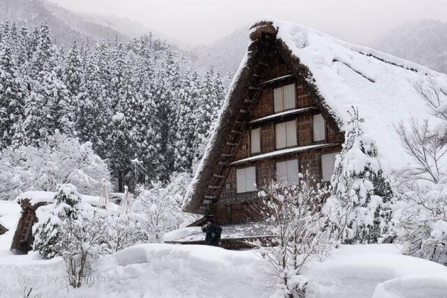 白川郷:明善寺庫裏、県指定重要文化財、大きな合掌造り。庫裏内は「明善寺郷土館」として有料公開されている。