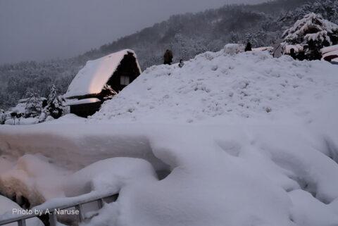 白川郷:明善寺周辺を徘徊、午後5時30分、ライトアップが始まったようだ。