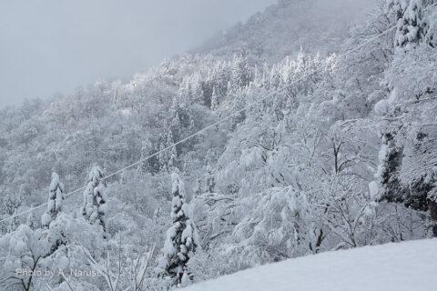 相倉集落:集落背後、山の斜面。