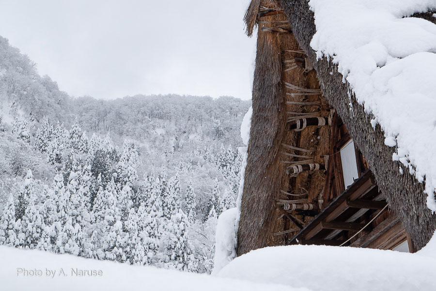 相倉集落:合掌造りの構造体は縄で結束されていて、金属の釘などは使われていないとか。