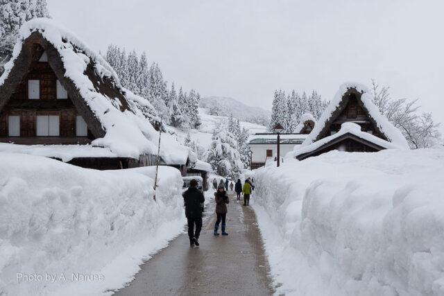 相倉集落:積雪は2-3m程度だった、しかし白川郷より急傾斜の合掌屋根に降る雪は厳冬期を除けば自然に滑り落ちやすいようだ。