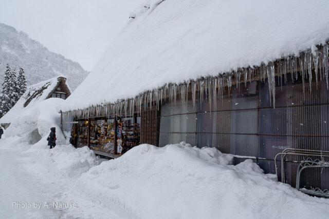 菅沼集落:つららが目につく、この地域は湿度の高い雪が降るためだろうか?